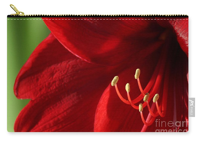Flower Carry-all Pouch featuring the photograph Amaryllis6739 by Gary Gingrich Galleries