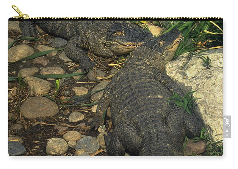 Alligator Carry-all Pouch featuring the photograph American Alligators by Gary Gingrich Galleries