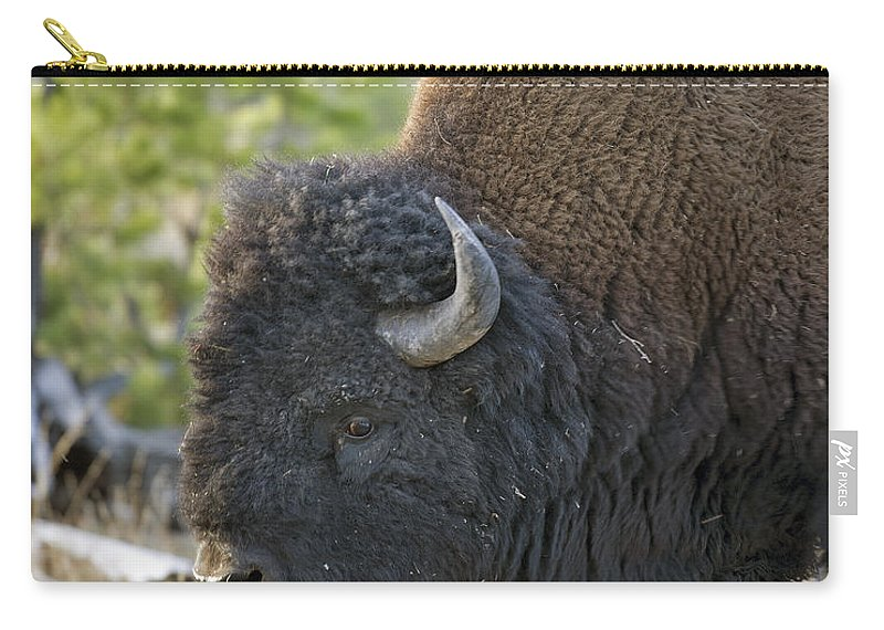 American Carry-all Pouch featuring the photograph American Bison by Gary Langley