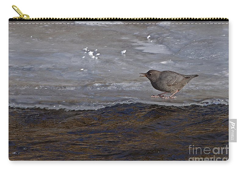 Cinclus Mexicanus Carry-all Pouch featuring the photograph American Dipper  #5851 by J L Woody Wooden