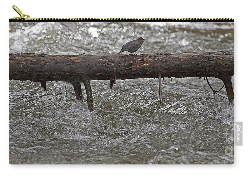 Cinclus Mexicanus Carry-all Pouch featuring the photograph American Dipper  #7963 by J L Woody Wooden