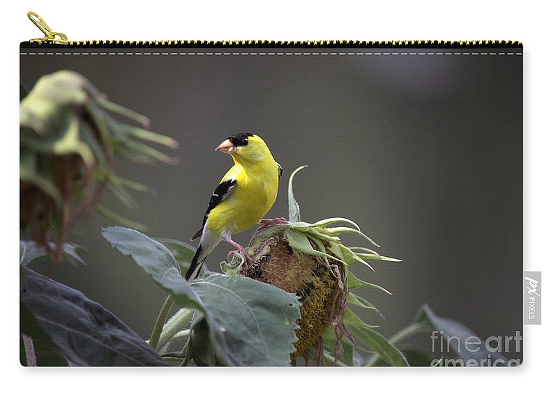 Bird Carry-all Pouch featuring the photograph American Goldfinch 5 by Randy Matthews