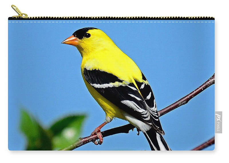 Bird Carry-all Pouch featuring the photograph American Goldfinch by Rodney Campbell