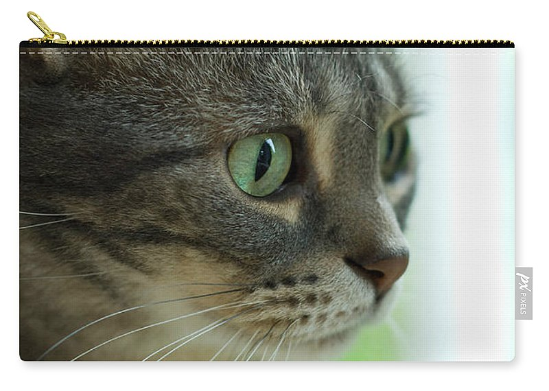 Alert Carry-all Pouch featuring the photograph American Shorthair Cat Profile by Amy Cicconi