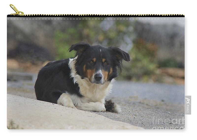 Dog Carry-all Pouch featuring the photograph Amish Dog by Lori Amway