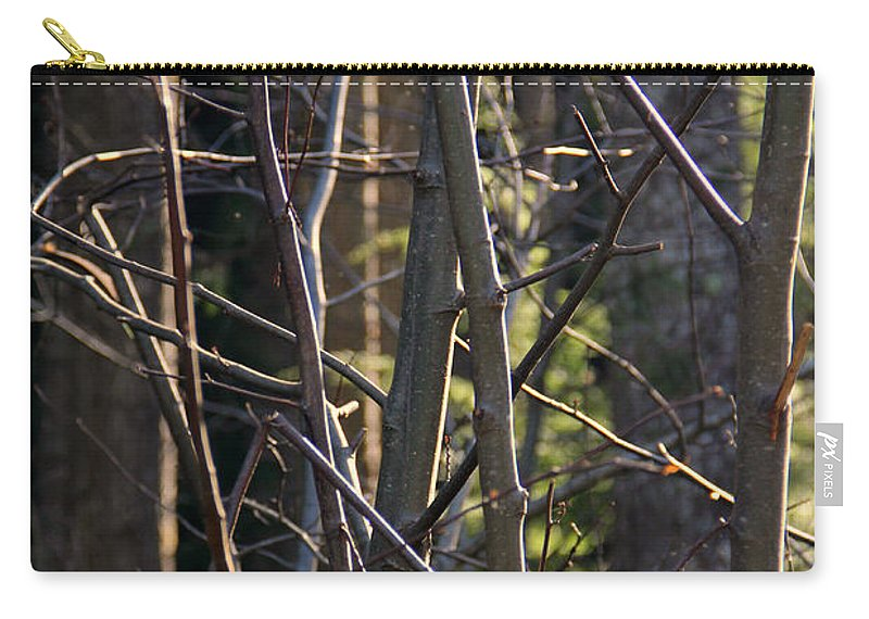 Capitol Forest Carry-all Pouch featuring the photograph An Afternoon Walk by Jeanette C Landstrom