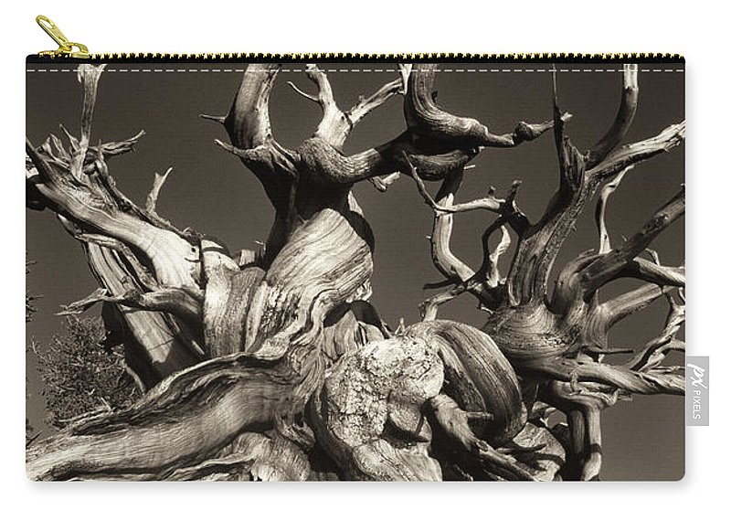American Carry-all Pouch featuring the photograph Ancient Bristlecone Pine In Black And White by Dave Welling
