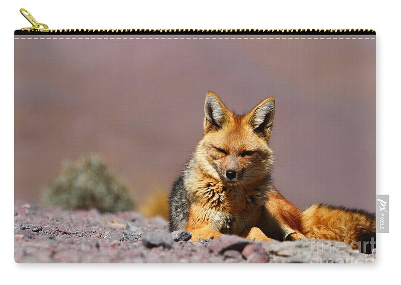 Foxes Carry-all Pouch featuring the photograph Andean Fox Portrait by James Brunker