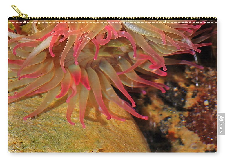 Sea Anemone Carry-all Pouch featuring the photograph Anemone by Randy Hall