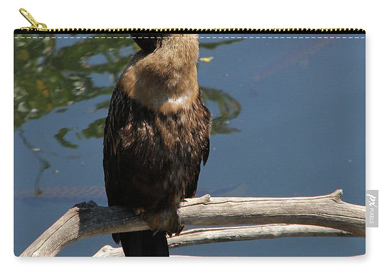 Anhinga Carry-all Pouch featuring the photograph Anhinga Immature by Doris Potter