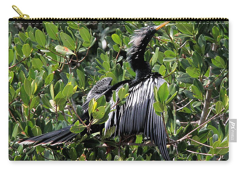 Anhinga Carry-all Pouch featuring the photograph Anhinga Male by Doris Potter