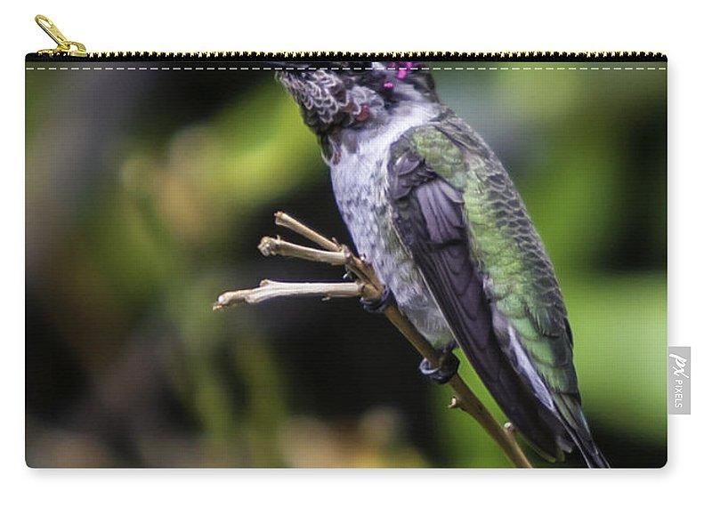 Hummer Carry-all Pouch featuring the photograph Anna Hummingbird by John Haldane