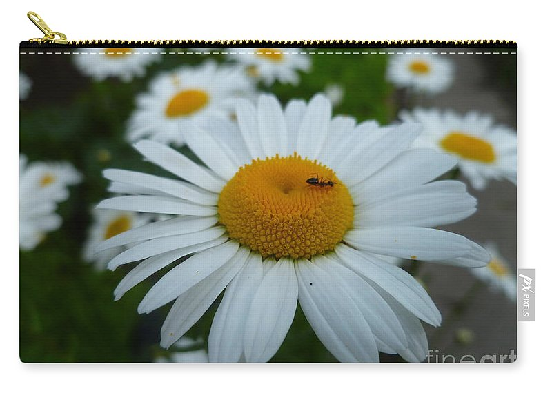Summertime Daisy Carry-all Pouch featuring the photograph Ant Nothing Sweeter Than My Little Daisy by Lingfai Leung
