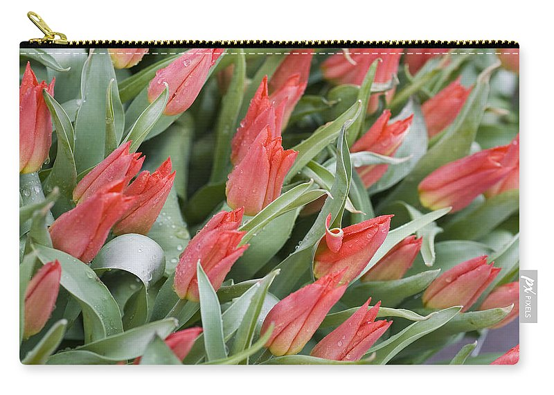 Anticipation Carry-all Pouch featuring the photograph Anticipation by Juli Scalzi