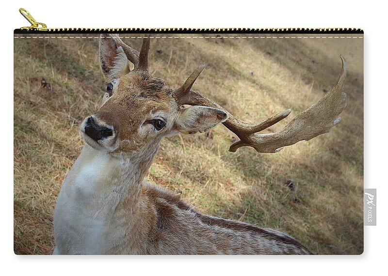 Antlers Carry-all Pouch featuring the photograph Antlers by Beth Vincent