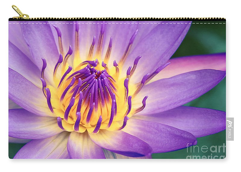 Waterlily Carry-all Pouch featuring the photograph Ao Lani Heavenly Light by Sharon Mau