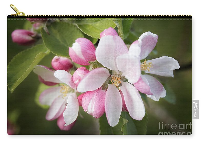 Apple Blossom Carry-all Pouch featuring the photograph Apple Blossom by Ann Garrett