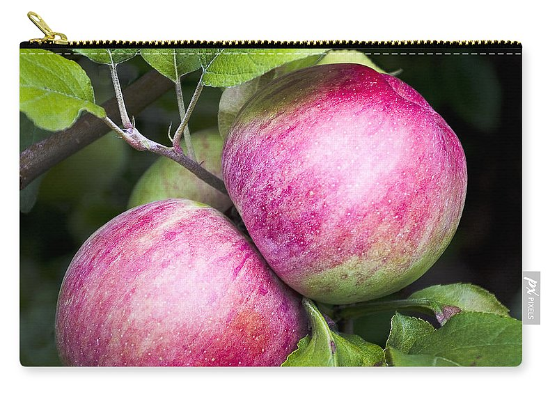 Apples Carry-all Pouch featuring the photograph 2 Apples On Tree by Steven Ralser