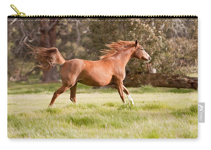 Arabian Horse Print Carry-all Pouch featuring the photograph Arabian Horse Running Free by Michelle Wrighton