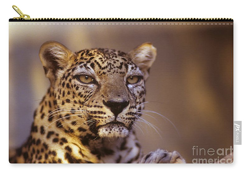 Arabian Leopard Carry-all Pouch featuring the photograph Arabian Leopard Panthera Pardus 1 by Eyal Bartov