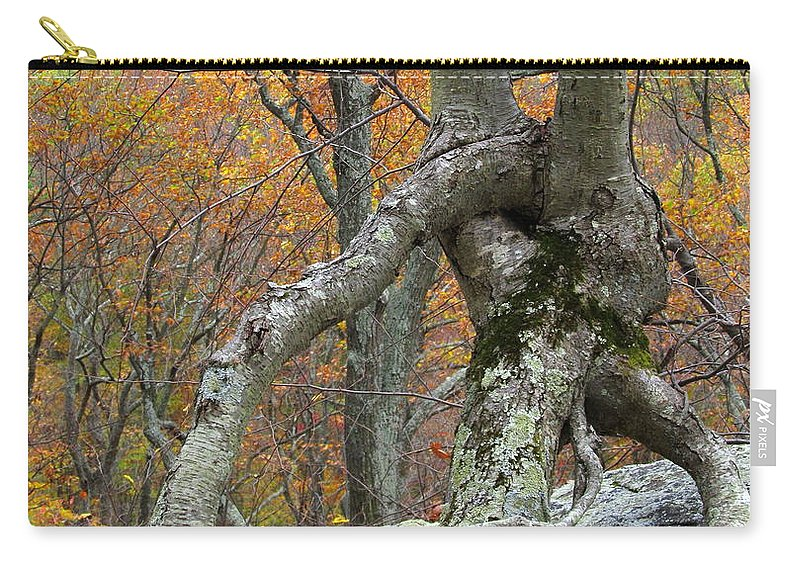 Arborial Architecture Images Appalachian Landscape Prints Arborial Photography Prints Nature Prints Nature Photography Images Strange Tree Prints Arborist Arborial Formation Unique Tree Prints Autumn Forest Prints Maryland Trees Fall Trees Autumn Trees Seasonal Forest Prints Sugarloaf Mountain Forest Prints Indian Summer Woodland October Foliage Photography Colorful Canopy Fall Forest Prints Autumn Trees Changing Leaves Weird Trees Appalachian Forest Landscape Prints Arborscape Prints Carry-all Pouch featuring the photograph Arboreal Architecture by Joshua Bales