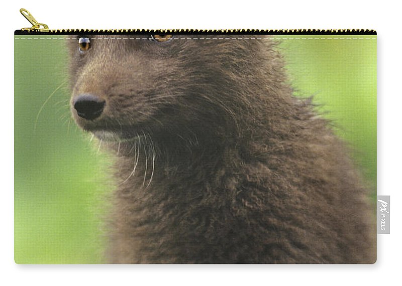 North America Carry-all Pouch featuring the photograph Arctic Fox Portrait Alaska Wildlife by Dave Welling
