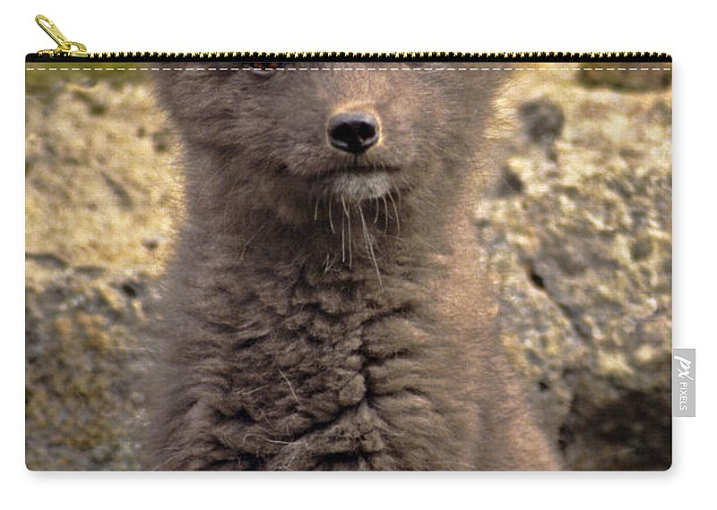 North America Carry-all Pouch featuring the photograph Arctic Fox Pup Alaska Wildlife by Dave Welling