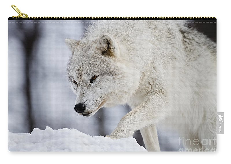 Arctic Wolf Carry-all Pouch featuring the photograph Arctic Wolf Pictures 1054 by World Wildlife Photography
