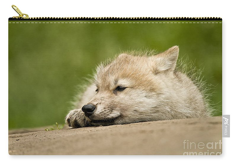 Arctic Wolf Carry-all Pouch featuring the photograph Arctic Wolf Pictures 1121 by World Wildlife Photography