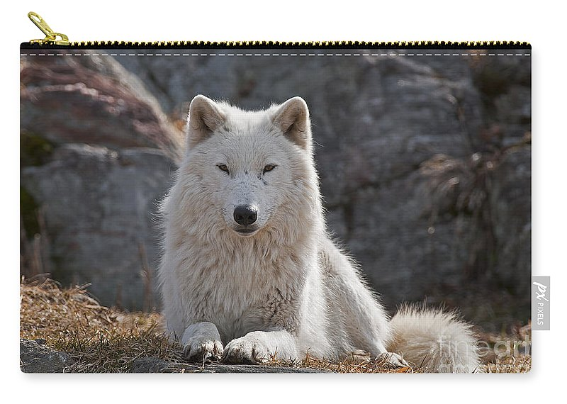 Arctic Wolf Greeting Cards Carry-all Pouch featuring the photograph Arctic Wolf Pictures 518 by World Wildlife Photography