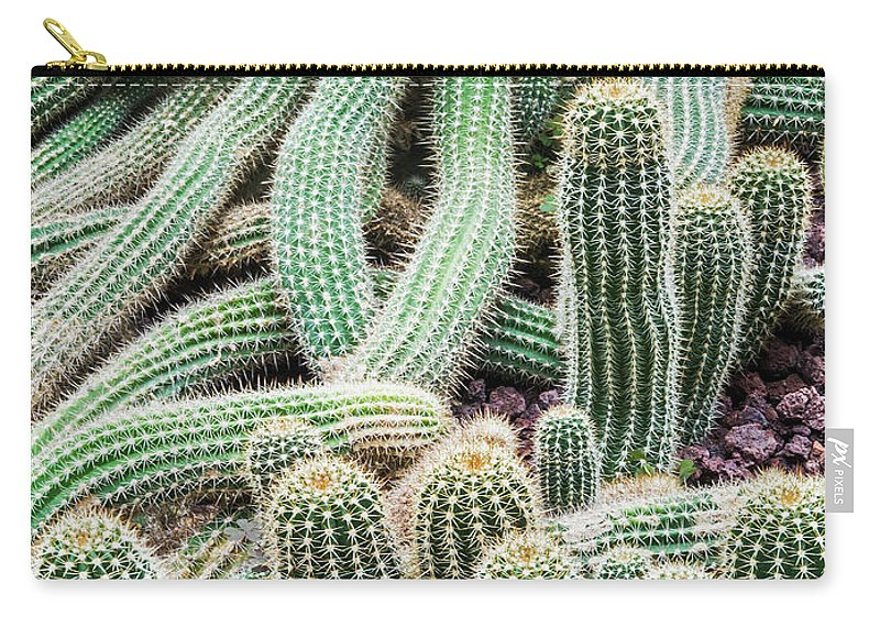 Heap Carry-all Pouch featuring the photograph Argentine Giant Cactus by Andy Sotiriou