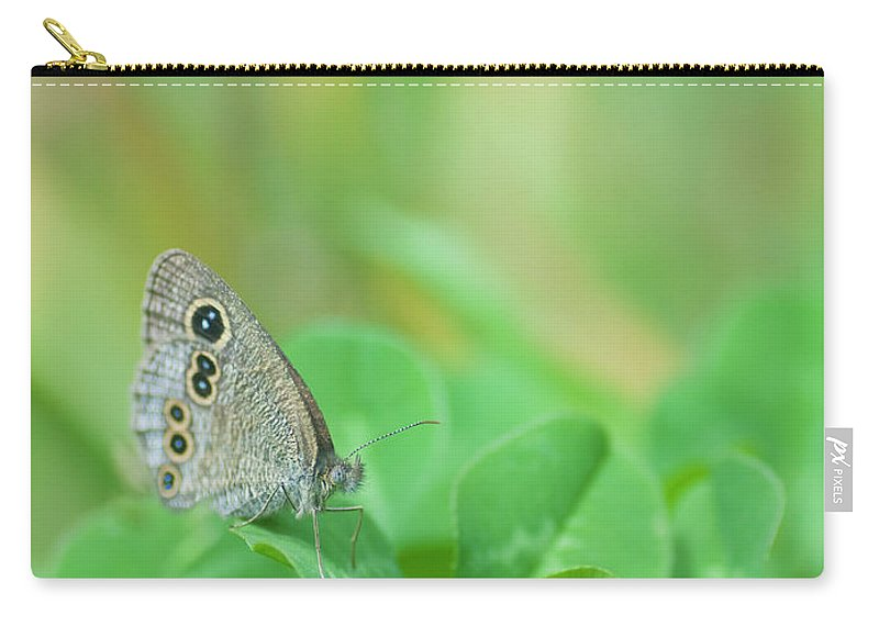 Insect Carry-all Pouch featuring the photograph Argus Rings Butterfly by Polotan