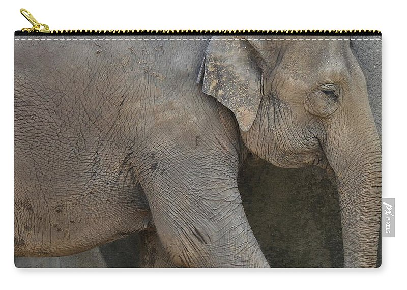 Asian Elephant Carry-all Pouch featuring the photograph Asian Elephant by Dan Sproul