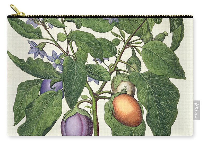Eggplant Carry-all Pouch featuring the drawing Aubergine Melanzana Fructu Pallido by German School