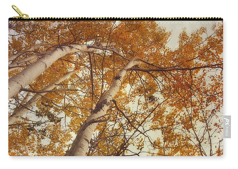 Aspens Carry-all Pouch featuring the photograph Autumn Aspens by Priska Wettstein