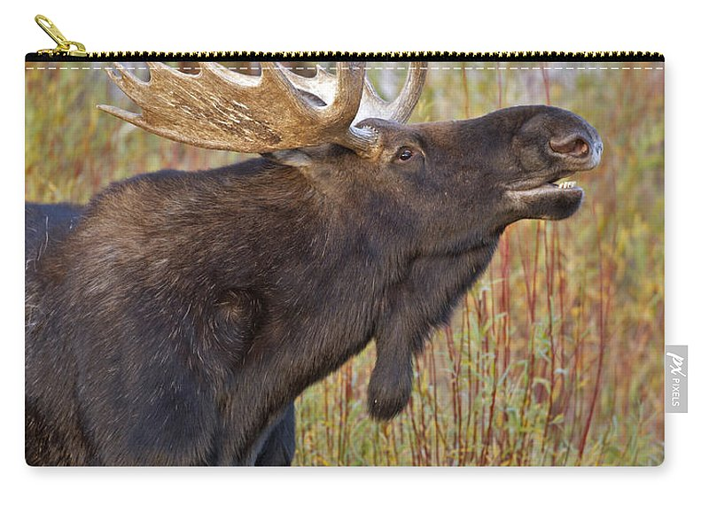 Bull Carry-all Pouch featuring the photograph Autumn Bull Moose II by Gary Langley
