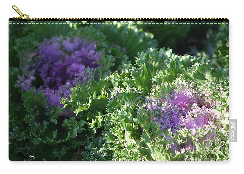 Cabbage Carry-all Pouch featuring the photograph Autumn Cabbage by Living Color Photography Lorraine Lynch