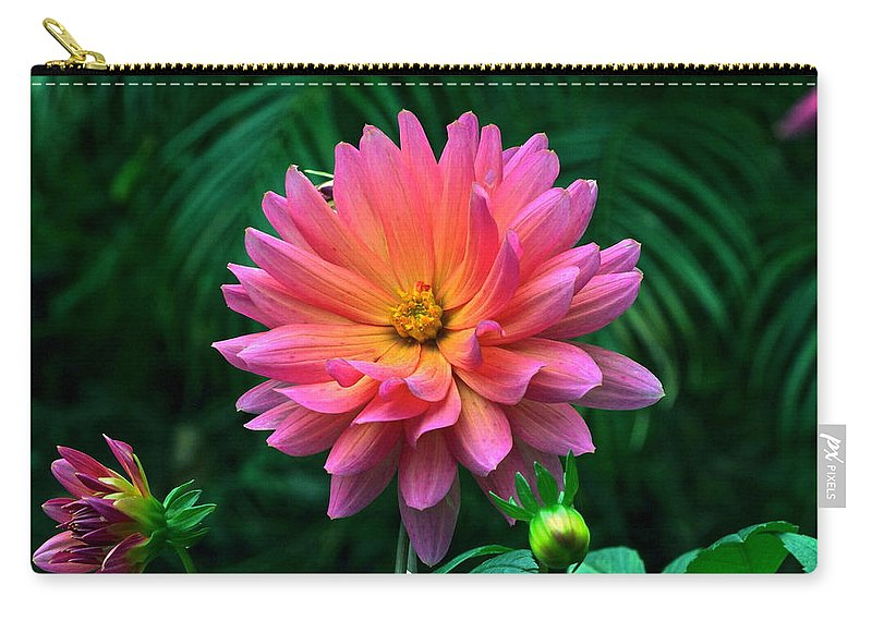 Dahlia Flowers And Buds Carry-all Pouch featuring the photograph Autumn Dahlias And Palms by Byron Varvarigos
