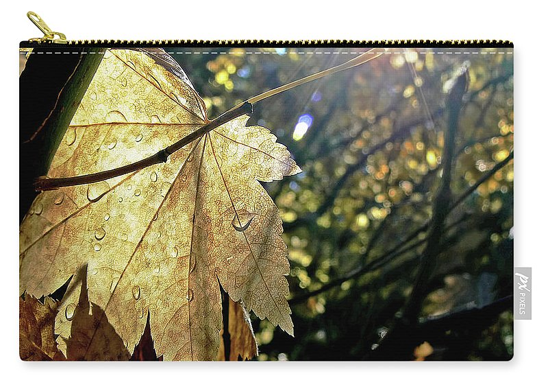 Leaf Carry-all Pouch featuring the photograph Autumn Light On Leaf by Jennie Marie Schell