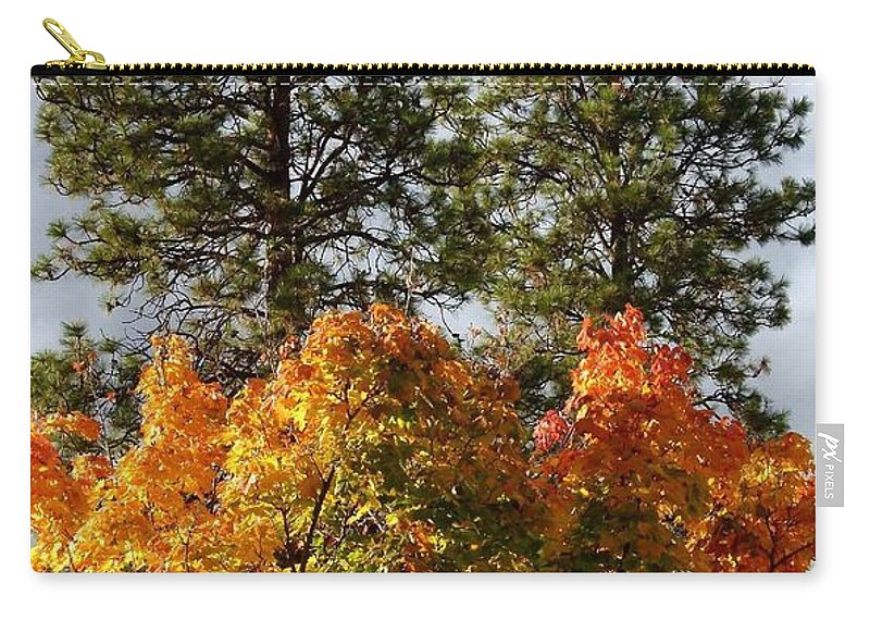 Autumn Maple With Pines Carry-all Pouch featuring the photograph Autumn Maple With Pines by Will Borden