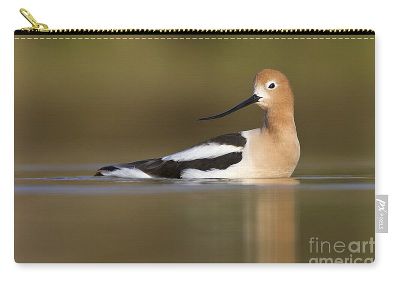 Avocet Carry-all Pouch featuring the photograph Avocet Looking Back by Bryan Keil