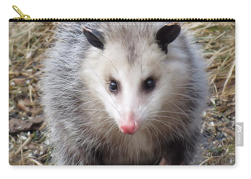 Possum Carry-all Pouch featuring the photograph Awesome Possum by MTBobbins Photography