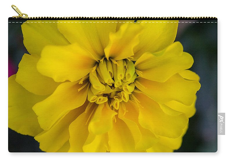 Neighborhood Carry-all Pouch featuring the photograph Ayz - A Yellow Zinnia by Renette Coachman