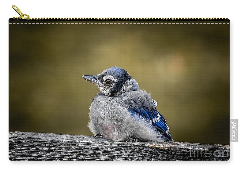Wildlife Carry-all Pouch featuring the photograph Baby Blue Jay by Robert Frederick