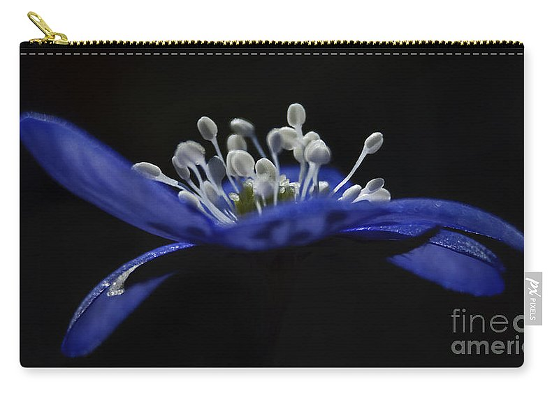 Festblues Carry-all Pouch featuring the photograph Baby Blues.. by Nina Stavlund