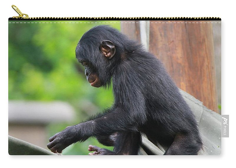 Playful Young Monkey Carry-all Pouch featuring the photograph Baby Bonobo by Dan Sproul