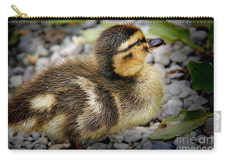 Baby Duck Carry-all Pouch featuring the photograph Baby Duck by Mariola Bitner