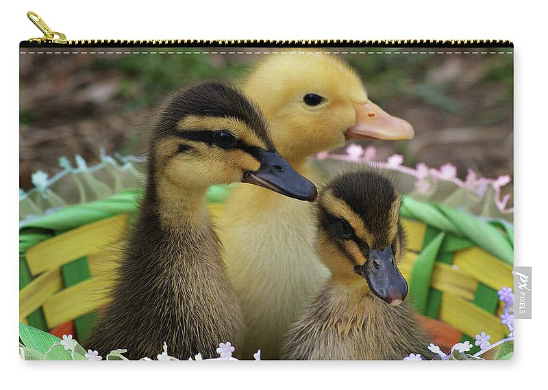 Ducks Carry-all Pouch featuring the photograph Baby Ducks by Sandy Keeton