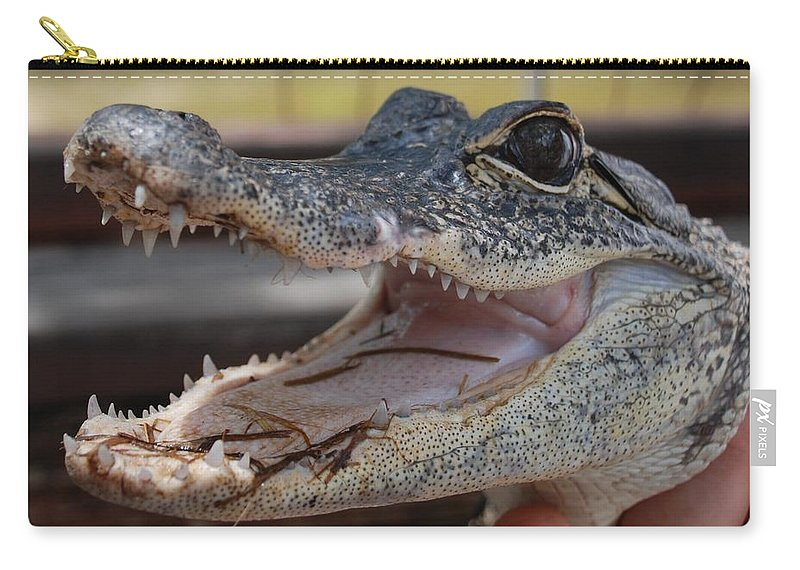 Macro Carry-all Pouch featuring the photograph Baby Gator by Rob Hans