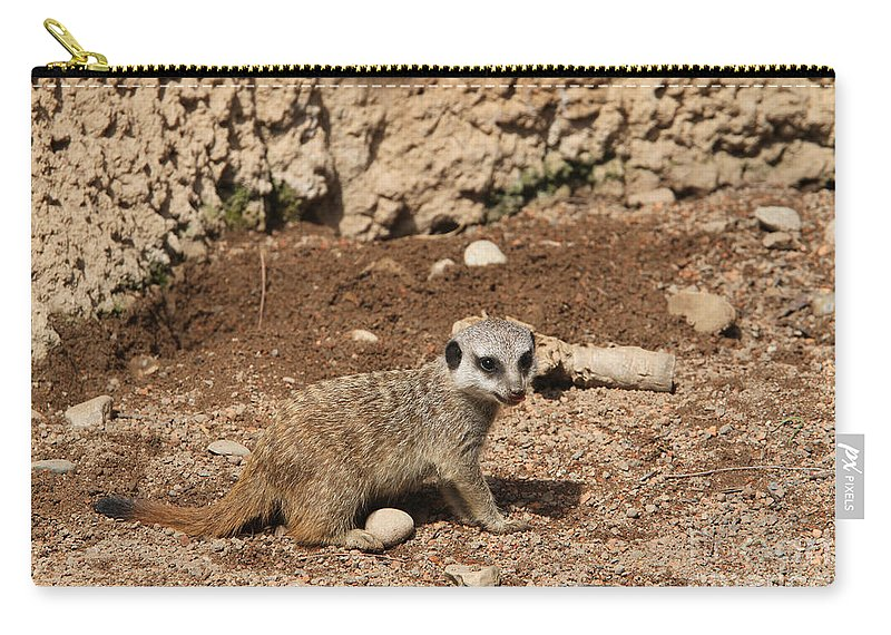 Meerkat Carry-all Pouch featuring the photograph Baby Meerkat by Judy Whitton